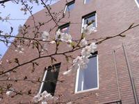 桜0330.JPG
