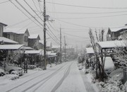 yuki.JPGのサムネール画像